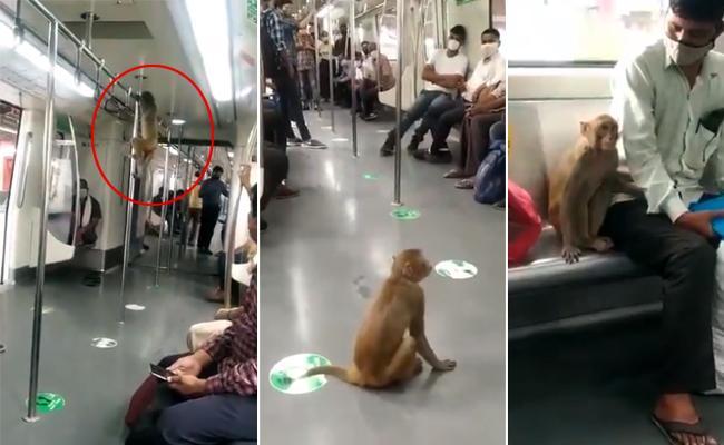 Monkey Travel With Passenger In Delhi Metro - Sakshi