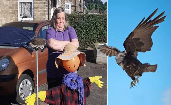 Aggressive Crows Nick Named Ronnie And Reggie Terrorise Street By Damaging Cars - Sakshi