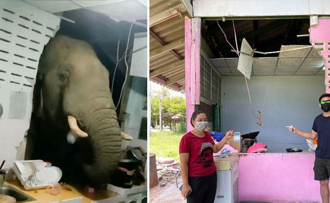 Thailand Elephant Attack In Kitchen Video Viral  - Sakshi