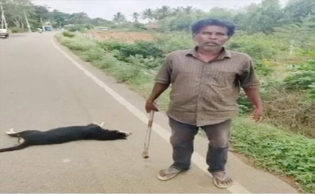 Man Brutally Attack On Street Dog In karnataka - Sakshi