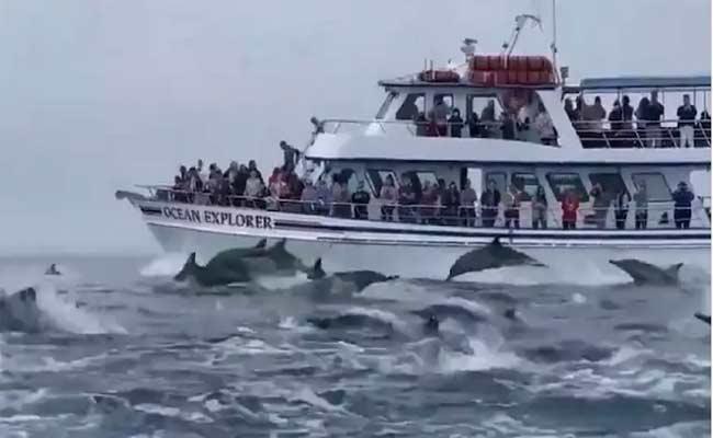 Dolphins Stampeding Alongside Boat Which Is Viral Shared By Harsh Goenka - Sakshi
