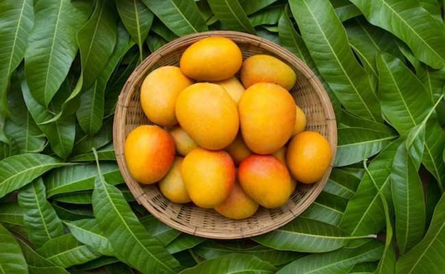 Sugar Free Mangoes Selling For Diabetics In Pakistan Market - Sakshi