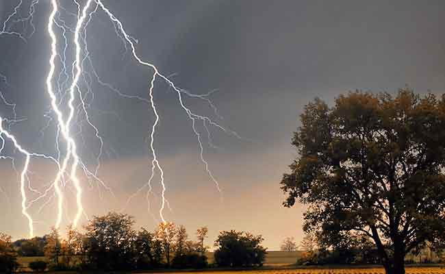 Lightning Assassinate Boy Injures 3 After They Climb Tree For Mobile Network In Maharashtra - Sakshi
