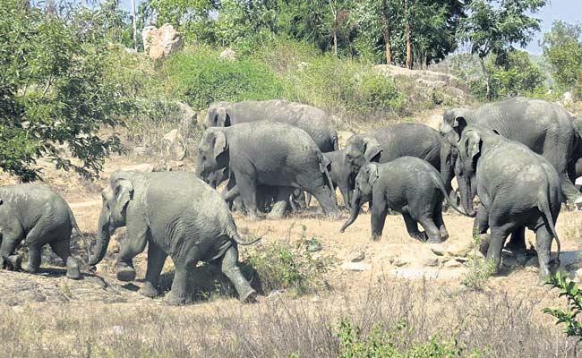 36 Elephants Enter Village In Chittoor District - Sakshi