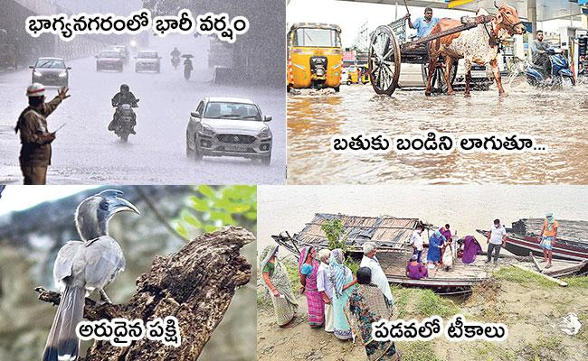 Local to Global Photo Feature in Telugu: Siddipet, Rare Bird, Covid Vaccination - Sakshi