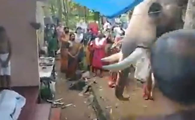 Heart Touching Video An Elephant Comes To Bid Final Farewell To His mahout). - Sakshi