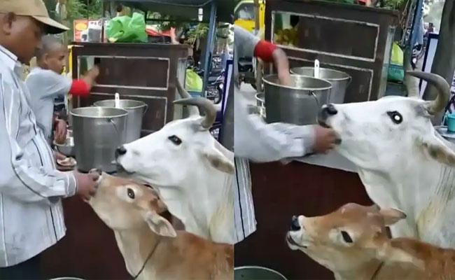 Man Treats Cow And Calf With Golgappas Feeds Them By Hand Became Viral - Sakshi