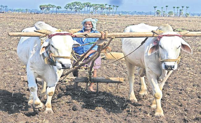 Scientists are referring to farmers for Seed Sowing - Sakshi