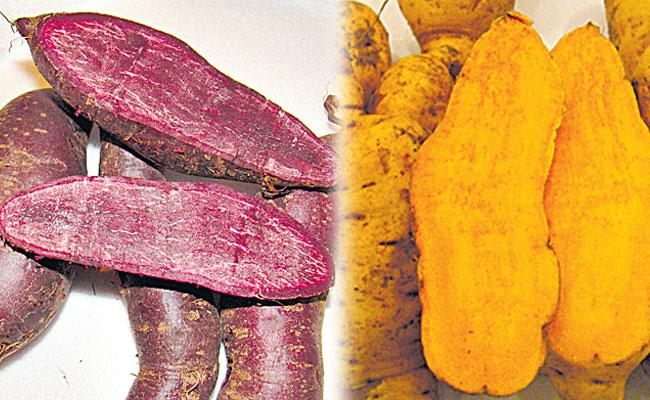 Orange, Purple Sweet Potato Prevent Cancer, Diabetes Risk: CTCRI - Sakshi