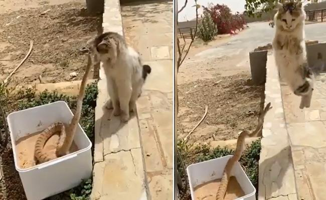 Cat Watching Snake Fearlessly And Escaped From It - Sakshi