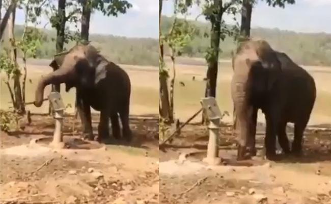 An Elephant Intelligence Show Attract Many People On Social Media - Sakshi