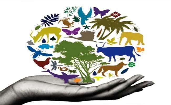 Sakshi Editorial On Biodiversity Conservation