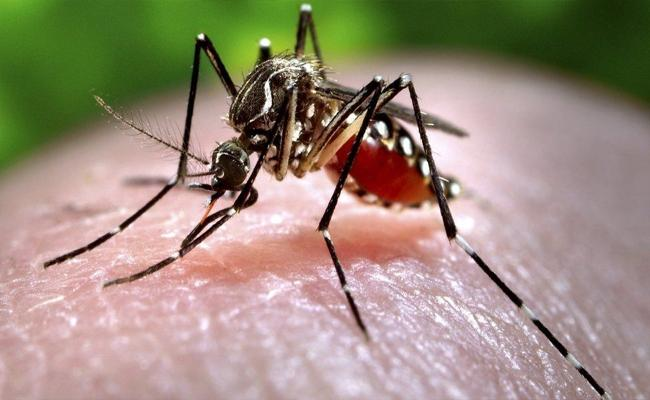 Zika virus: Indias Kerala State On Alert After 14 Cases Reported - Sakshi