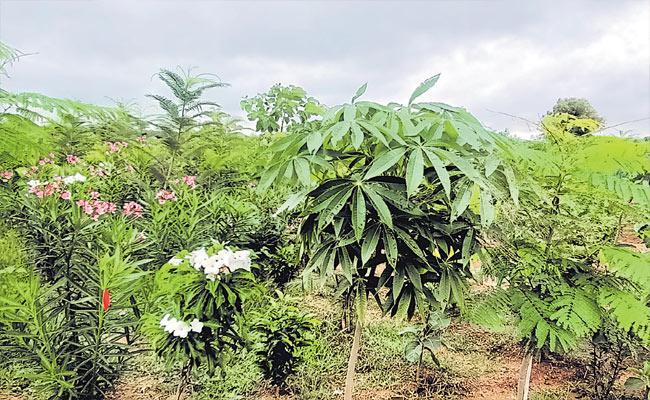 116 Types Of Different Plants Found In Kalabgoor Village Sangareddy - Sakshi