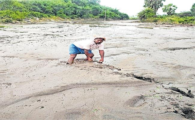 Crops In Several Districts Were Submerged Due To Heavy Rains - Sakshi