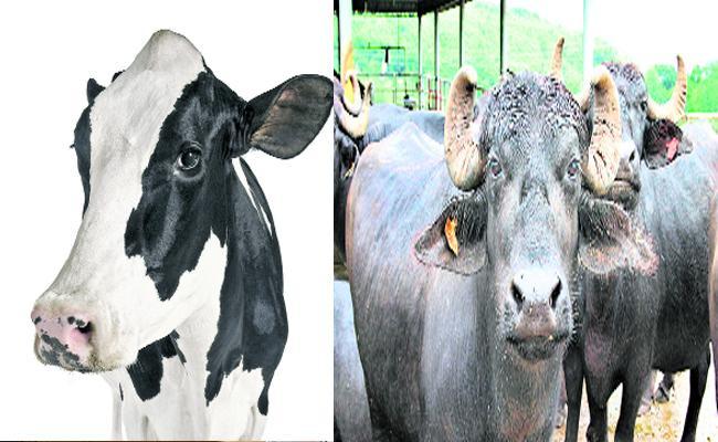 Andhra Pradesh To Implement AP Bovine Breeding Act 21 - Sakshi