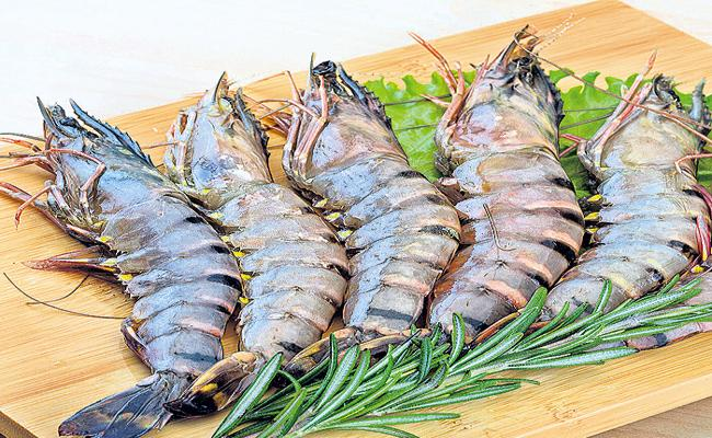 Andhra Pradesh Tiger prawns are returning to cultivation - Sakshi