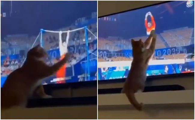 Cat Watches Gymnasts Perform at Tokyo Olympics n TV, Viral Video - Sakshi