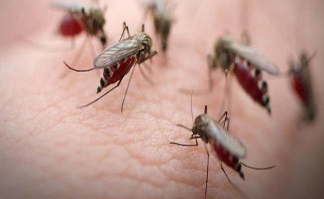 Malaria, Dengue What Is Symptoms Causes And More - Sakshi