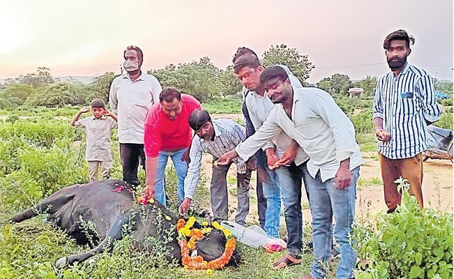 Muslim Activist Buries Dead Cow With Hindu Rituals In Kamareddy - Sakshi