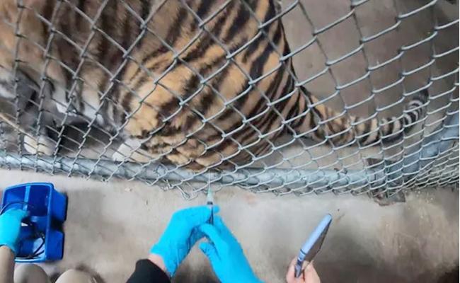 Animals In Oakland Zoo Receives Vaccine - Sakshi