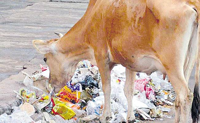 Austria Scientists: Enzymes In Cow Stomach Can Break Plastic - Sakshi