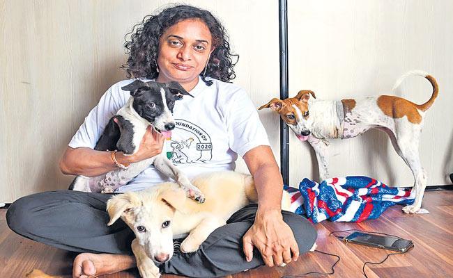 Sakshi Special Story On Stray Animal Foundation of India
