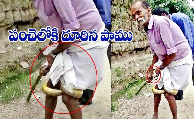 Snake Attack On Man In Manakondur At Karimnagar District - Sakshi