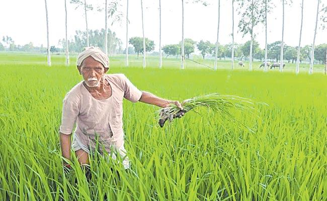 Telangana: Central Assistance To Farmers With Various Problems - Sakshi