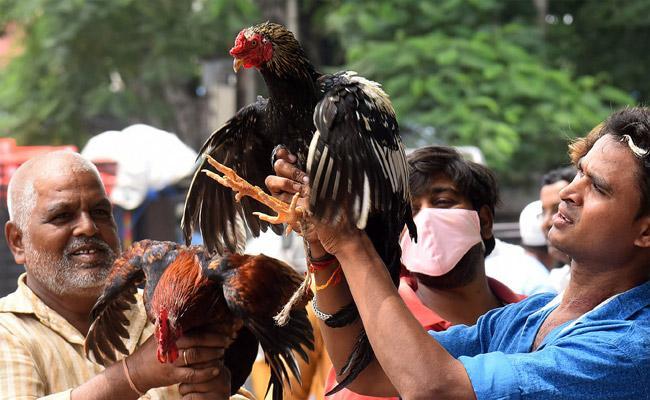 Natukodi Price Hike In Hyderabad Due To Bonalu Festival - Sakshi