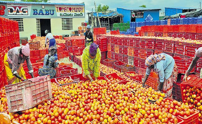 Tomato prices Falling In Andhra Pradesh - Sakshi