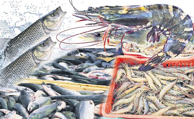 Andhra Pradesh prawns and fish are in high demand in the United States - Sakshi