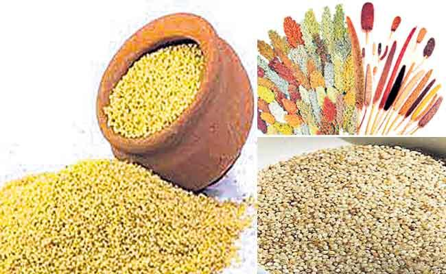 Agriculture Department Give Awareness To Increase Millets Farming In AP - Sakshi