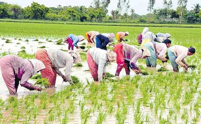 Preparing For Alternative Cultivation Telangana Agriculture Department - Sakshi