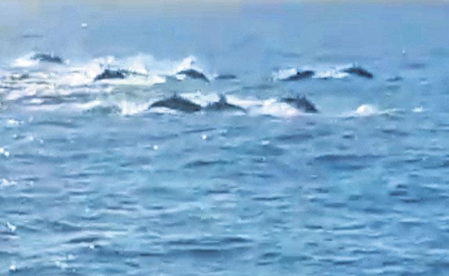 Dolphins In Rushikonda Beach - Sakshi