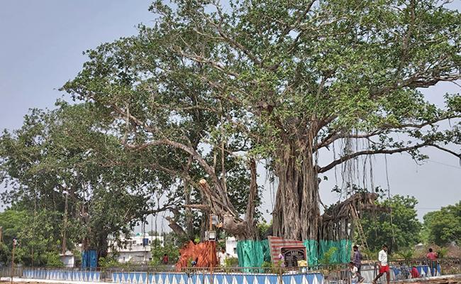 More Than 100 Years Banyan Tree History - Sakshi