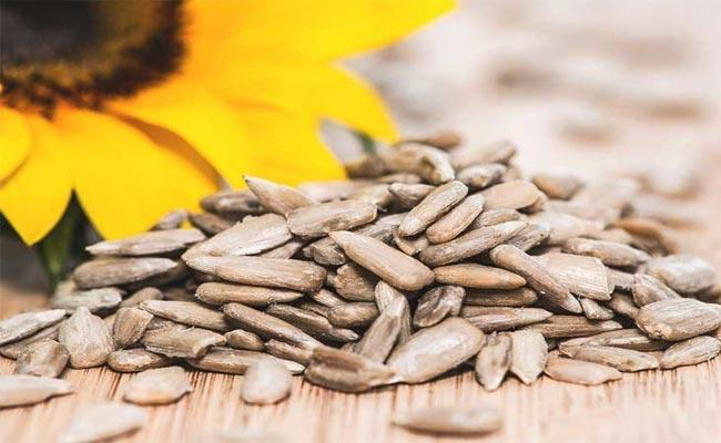 Eating sunflower seeds a day provides plenty of essential nutrients and antioxidants - Sakshi