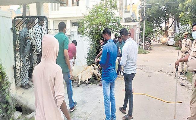 Cattle Attack People At  Kamareddy District - Sakshi