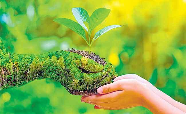 Dileep Reddy Guest Column On Forest Protection In India - Sakshi
