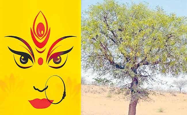 MP Joginapally Santosh Guest Column On Shami Tree - Sakshi