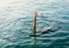 Father and Son Missing in Sagar Left Canal - Sakshi