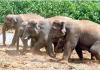 Elephants Attack On YSR Kadapa Villages - Sakshi